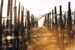 vin-naba-jurançon-photographe-clement-herbaux