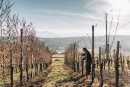 reportage-photo-clement-herbaux-vin-jurançon-naba